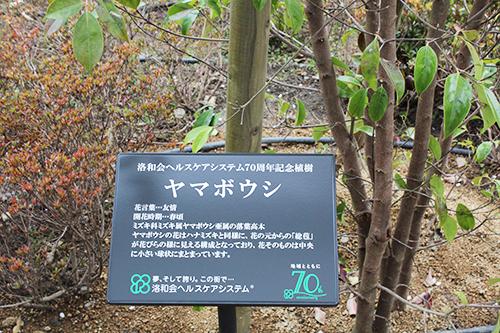 syokuju3.jpg